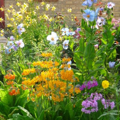 Himalayan garden spring gardens