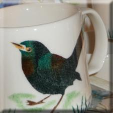 blackbird design